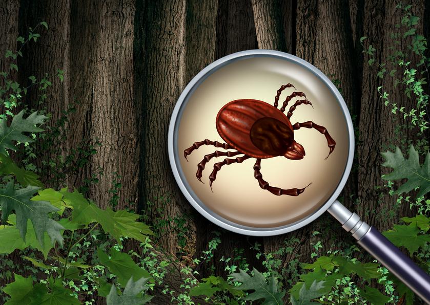 Tick Habitats